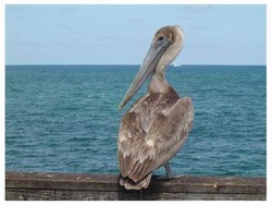 ~ Welcome to Sebastian ~ Home of Pelican Island ~